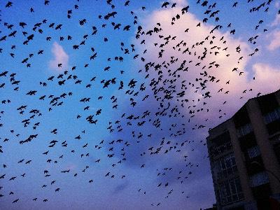 migrate-ceph-cluster-from-ubuntu-to-rhel.jpg